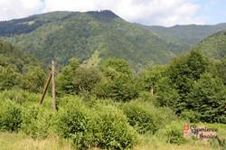Transcarpathian natural Woodland-imp