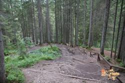 Woodlands in Carpathians