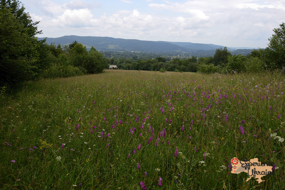 Wild flower meadow in Kosiv-imp