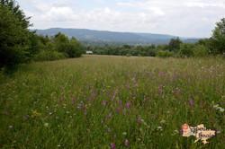 Wild flower meadow in Kosiv-imp