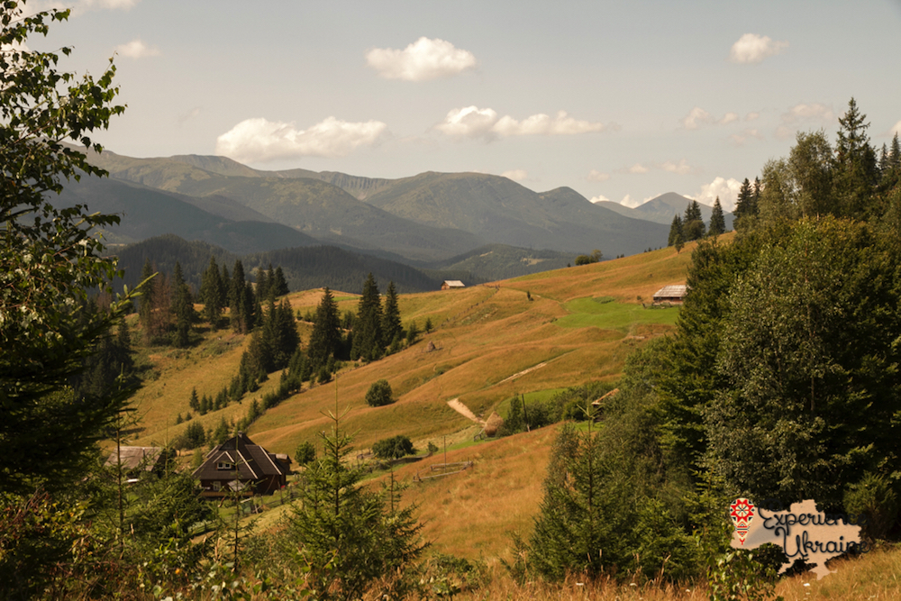 Summer in Carpathian Mountains