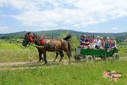 Horse ride in Transcarpathia-imp