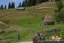 More hay stacks