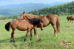 Ukrainian foal and mare in meadow LR-imp