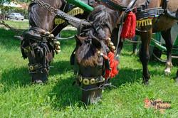 Horses decked up-imp