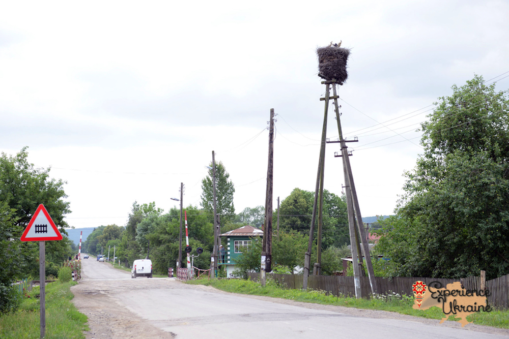 Storks nest on teegraph poles-imp