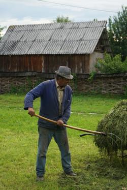 Making hay in Romania