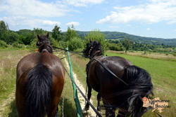 View from horse drawn cart LR-imp