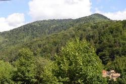 Transcarpathian woodland-imp