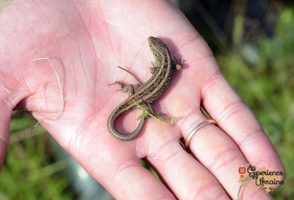 Ukrainian sand lizard-imp