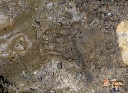 Bear footprint-imp