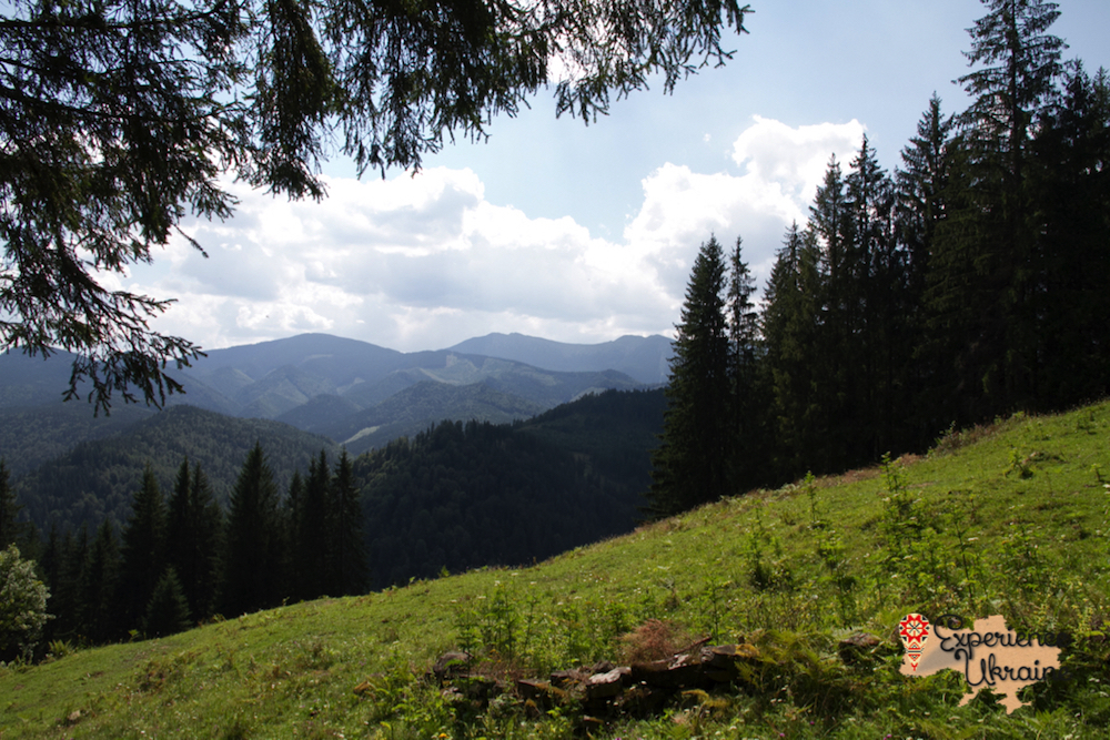 Summer in Carpathians