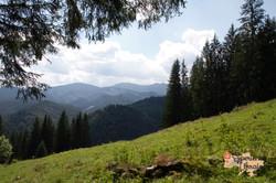 Summer in Carpathians