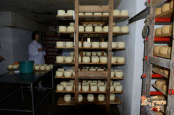 Cheese making factory-imp