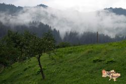 Mist in Dzembronya