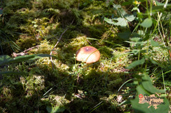 Foraging for forest goods