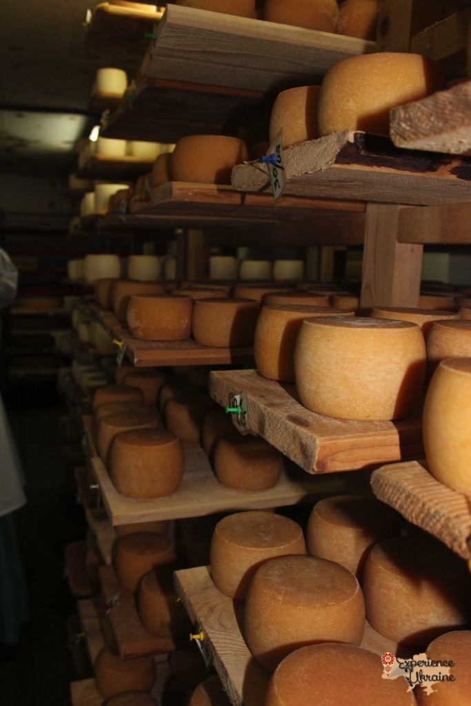 Organic Cheese Farm