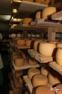 Organic Cheese Farm
