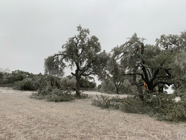 Log Cabin area - Day 1