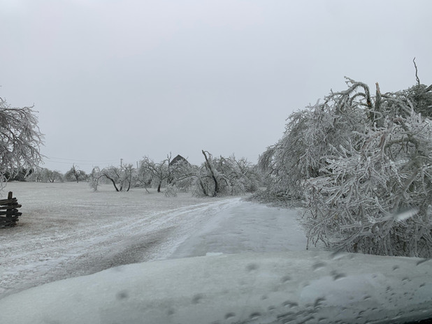 We watched as trees fell and covered the driveway