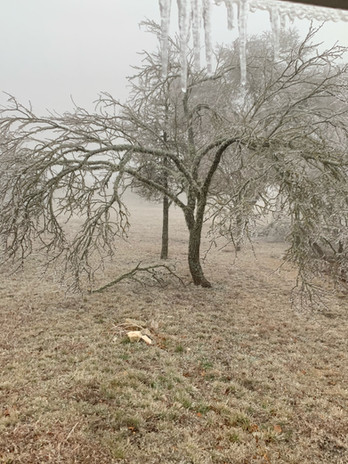 Day One of the February 2021 Ice Storm