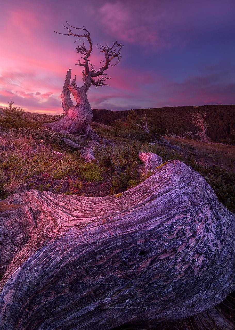 Lone Tree, USA
