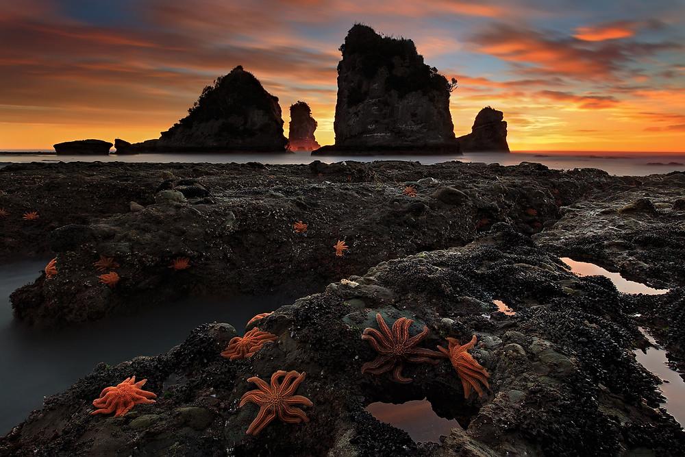 Starfish Colony