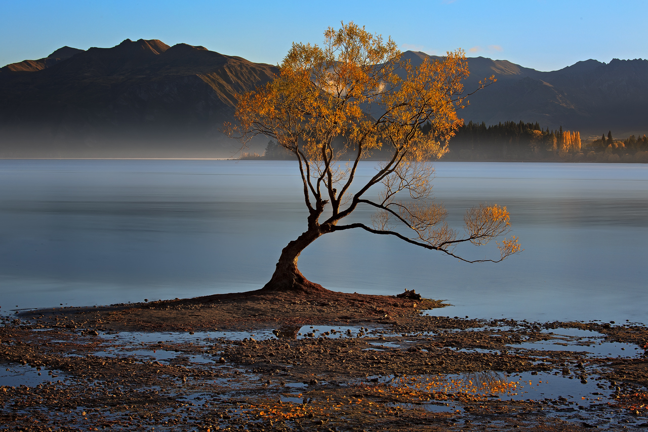Lone Tree of NZ