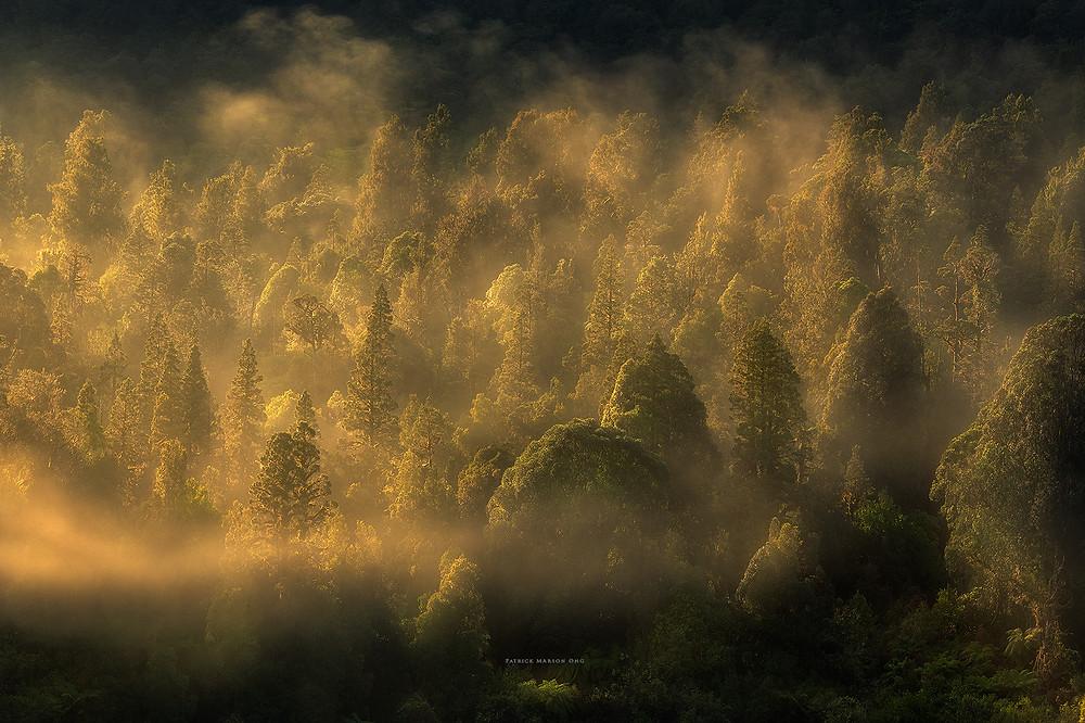 Foggy morning on Franz Josef