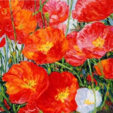 Sonoma Poppies II