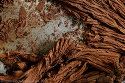Les_journées_du_chocolat