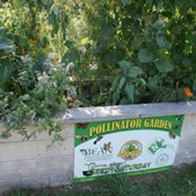 pollinator 5.jpg