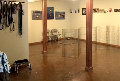 Basement for Dog Training