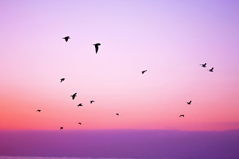 nature-sky-bird-animals-21261.jpg