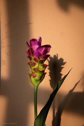 bloemen_fotografie_sanne-neuteboom-3.jpg
