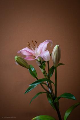 bloemen_fotografie_sanne-neuteboom-5.jpg