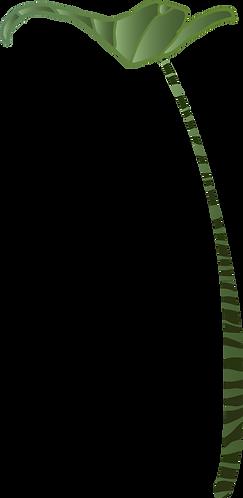 Zebrina-2-illustratie-sanneneuteboom.png