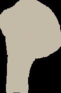 Illustraties-zwammen-5-sanneneuteboom.png