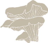Illustraties-zwammen-2-sanneneuteboom.png