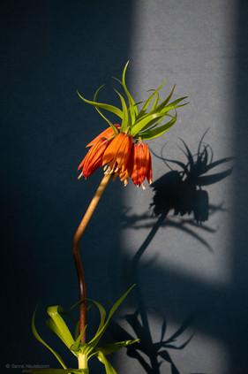 bloemen_fotografie_sanne-neuteboom-4.jpg