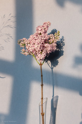 bloemen_fotografie_sanne-neuteboom-2.jpg