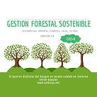 ¿Qué es la Gestión Forestal Sostenible?