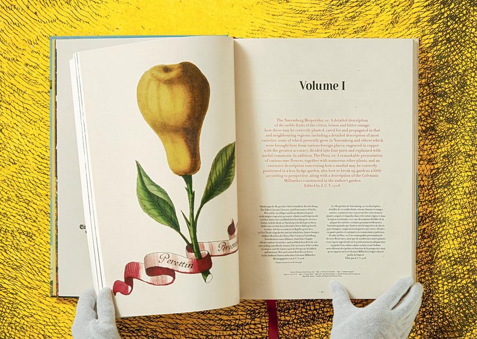 05_volkamer_citrus_fruits_xl_int_open003