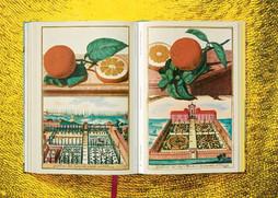 12_volkamer_citrus_fruits_xl_int_open002