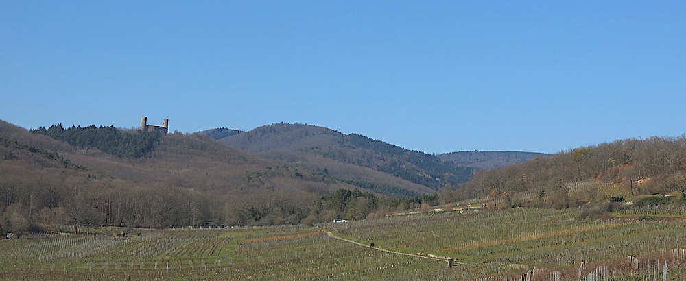 Le Zotzenberg au premier plan, au fond le château d'Andlau.