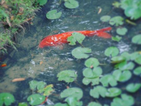 Lumina College fulfills five-year partnership with Dragon Garden