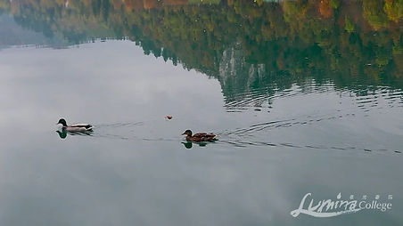 ducks%20-%20web_edited.jpg