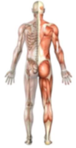 Back pain, neck pain, shoulder pain