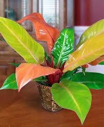 My Plant Wishlist 2020