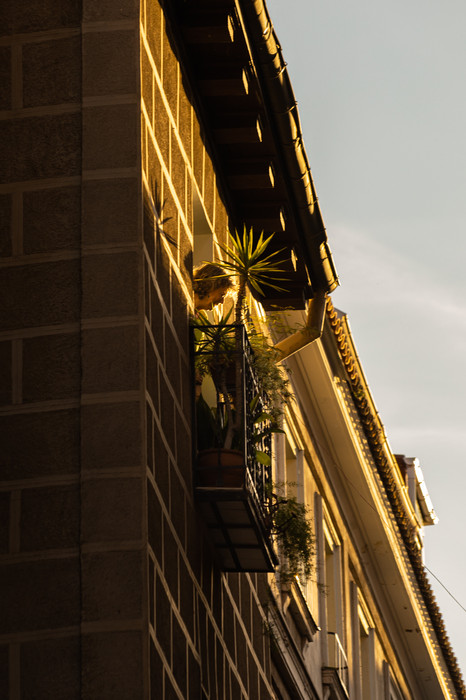 palmera balcon.jpg